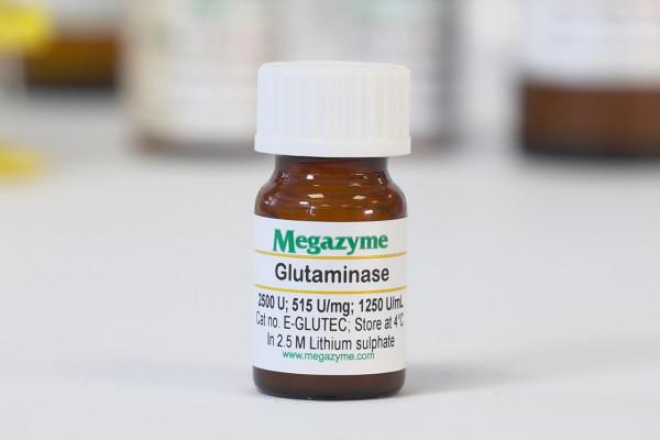 Glutaminase (Escherichia coli)