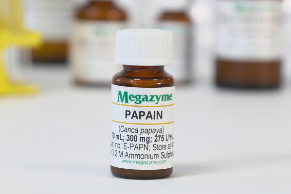 Papain (Carica papaya)