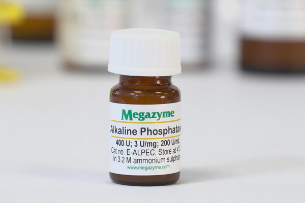 Phosphatase (Alkaline) (Escherichia coli)